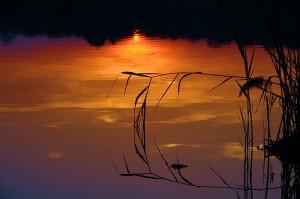 Tus acciones reflejan tu conciencia - usa la hipnosis